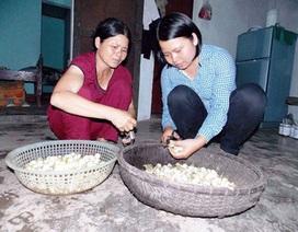 Thạc sĩ Mỹ - Úc về Việt Nam làm hương, làm mắm