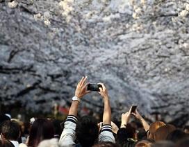 Nhật Bản: Sinh viên sử dụng Smartphone bị đuổi  học