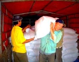 Phân bổ 1.000 tấn gạo cứu đói cho nhân dân vùng lũ
