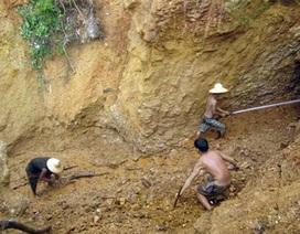 """Doanh nghiệp """"bịp"""" cả Sở Nông nghiệp vào đào xới rừng phòng hộ"""