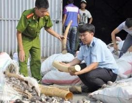 Khởi tố hình sự 2 vụ buôn lậu gần 5 tấn ngà voi