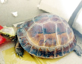 Việt Nam đề xuất hai loài rùa cấm buôn bán quốc tế