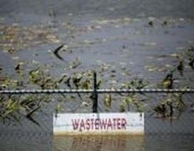Sản xuất năng lượng sạch từ nước thải ô nhiễm