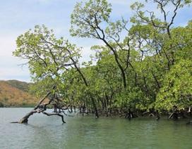 Vườn quốc gia Côn Đảo được công nhận là khu đất ngập nước quan trọng quốc tế