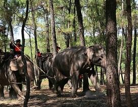Một chuyến săn voi của dũng sĩ Ama Kông 42 năm trước
