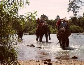 Học bảo tồn voi nhà vì sốt ruột với việc mất dần đàn voi