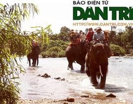 Kiệt sức, voi du lịch chết trong rừng