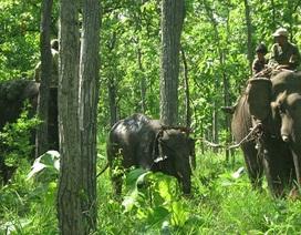 Đề nghị khen thưởng đoàn cứu hộ voi rừng