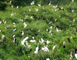 Vườn quốc gia Tràm Chim thành khu Ramsar thứ 4 của Việt Nam