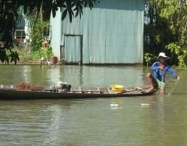 Một tiểu thương thả gần 2 tấn cá nước ngọt ra sông