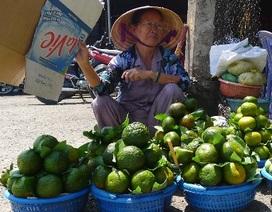 Nắng nóng, cam sành, dừa tươi tăng giá vùn vụt