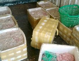Hàng tấn nội tạng động vật bốc mùi trên xe chở hàng đông lạnh