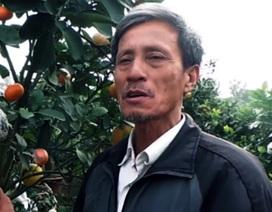 """Chuyện về lão nông """"phù phép"""" ra cây ngũ quả ở Hà Nội"""