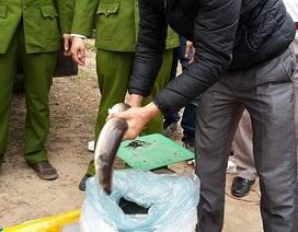 """Bắt giữ hơn 6 tấn cá Trung Quốc """"tuồn"""" lậu vào Hà Nội"""