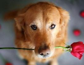 """Bộ ảnh về chú chó cưng của cô gái gốc Việt gây """"sốt"""" tại Mỹ"""
