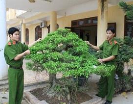 """Bộ Công an chỉ đạo làm rõ vụ cướp cây cảnh """"tiền tỷ"""" ở tỉnh Hòa Bình"""