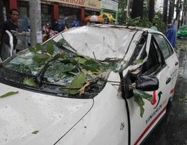 Cây xanh đè bẹp taxi, 4 người thoát chết