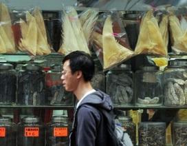 Trung Quốc cấm quan chức... ăn vi cá mập bằng tiền ngân sách