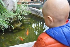 Có mặt tại cơ quan báo điện tử Dân trí, Lanh thích thú khi nhìn thấy con cá vàng.