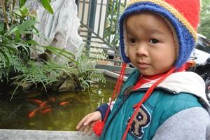 Lần nào lên cơ quan Dân trí, cậu bé cũng thích thú với những con cá vàng.