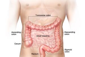 Đại trực tràng gồm 4 phần: đại tràng tăng dần, đại tràng ngang, đại tràng giảm dần và đại tràng xích ma.