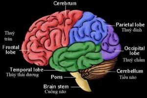 """Não bộ và """"chìa khóa hóa học""""  trong tình yêu"""