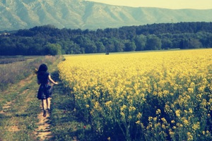 Hoa colza: Modele: Thi Lanh, Photographe: Lan Tử Viên