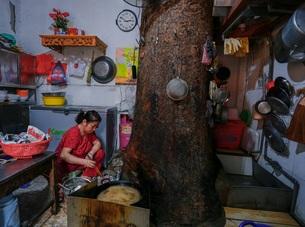 """Kỳ dị cây mọc giữa nhà trong khu tập thể cũ """"độc nhất"""" Hà Nội"""