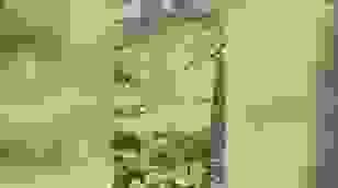 Kỳ lạ: Hàng trăm con cừu đứng yên bất động rất lâu như bị thôi miên