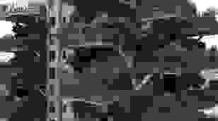 """Bị muỗi tấn công hàng ngàn người rời bỏ """"chung cư xanh"""" ở Trung Quốc"""