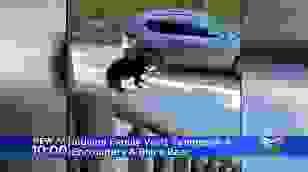 Gấu mở cửa, trèo vào xe ô tô như người