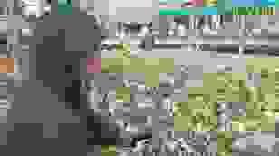 Người trồng hoa bị thiệt hại nặng do mưa lũ