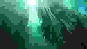 """Kỳ lạ rừng cây """"mọc ngược"""" từ dưới đáy hồ"""