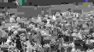 """Nhiếp ảnh gia """"bó tay"""" trước cảnh chen chân trong vườn cúc họa mi ở Hà Nội"""