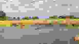 Sư tử đực cứu em trai bị cá sấu tấn công trong lúc bơi qua sông