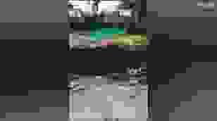 Video hổ lạc vào khu dân cư, đuổi bắt khiến người rơi xuống hố