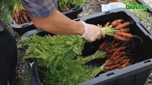 Biến đất hoang, sân thượng thành vườn rau cung cấp nông sản cho người nghèo