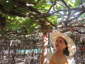 Ninh Thuận: Du khách hào hứng với tour hái nho tại vườn