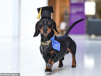 """Anh: Chú chó """"hỗ trợ tâm lý"""" cho sinh viên đại học"""