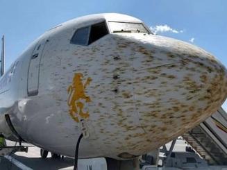 Máy bay phải chuyển hướng đột ngột vì gặp phải đàn châu chấu khổng lồ