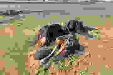 Quái vật khổng lồ dạt vào bờ biển nước Anh