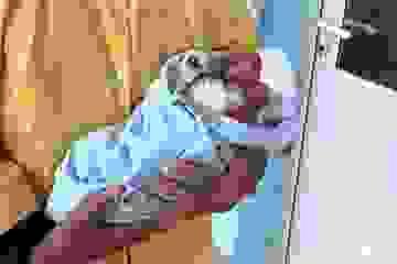 Bé trai chào đời với cơ thể nứt nẻ, rớm máu được xuất viện