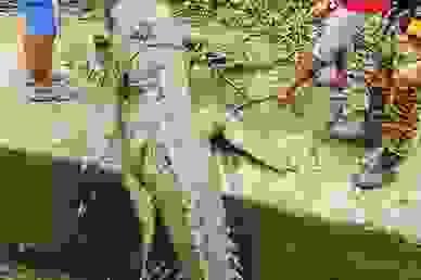 Tìm thấy thi thể cậu bé 14 tuổi bị mất tích ở Malaysia trong bụng cá sấu