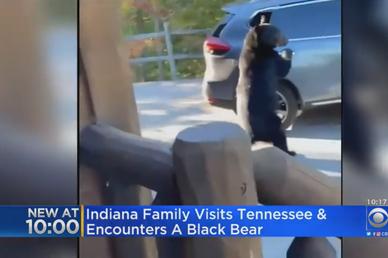 Kinh ngạc xem gấu mở cửa, trèo vào xe ô tô như người