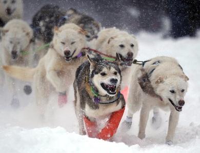 Loài chó được con người thuần hóa từ khi nào?