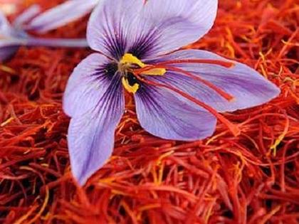 """Saffron Nhụy hoa nghệ tây - Thứ gia vị được ví như """"vàng đỏ"""""""
