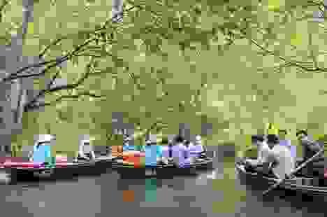 Tận mắt rừng vối cổ thụ hàng nghìn cây giữa vùng lõi di sản Tràng An