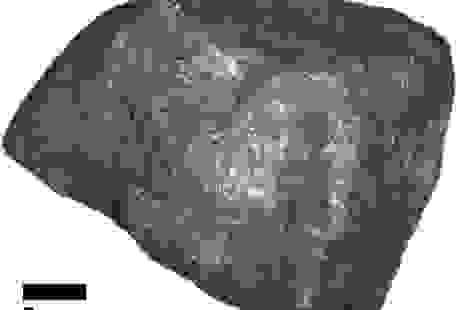 """Thiên thạch rơi xuống nước Mỹ có thể chứa """"nguồn gốc của sự sống"""""""