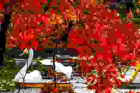 Koyo - Mùa cuốn hút du khách lên đường thưởng ngoạn sắc lá Thu