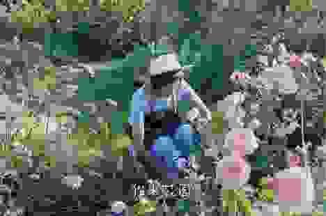Bán nhà thành phố, vợ chồng về quê biến đất hoang thành vườn ngập hoa lá
